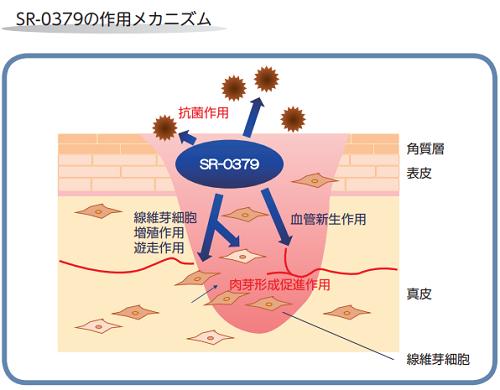 SR-0379の作用メカニズム